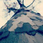 Árbol visto desde la base hacia las ramas